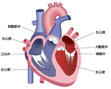 2.心臓弁膜症の原因 | 弁膜症の治療 | 患者様・ご家族の方 | 日本 ...